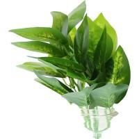 Buchet Frunze Verde